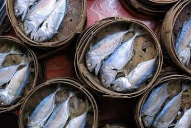Can I eat fish during pregnancy?