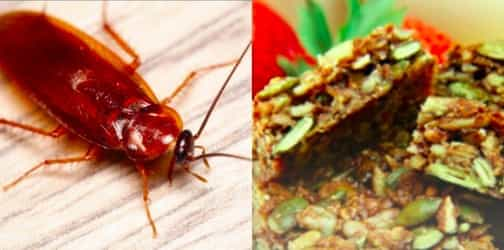 Parents find cockroach in baby food: food safety tips for parents