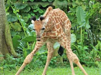 Say hello to Singapore's tallest SG50 baby!