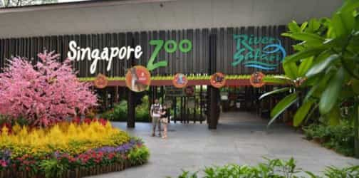 Wildlife Reserves Singapore now has a membership scheme that covers all 4 parks!