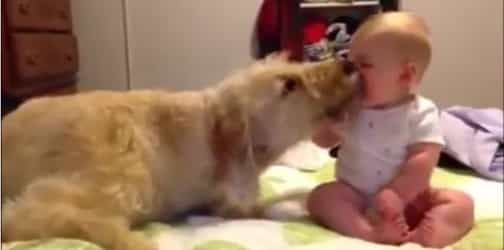 Babies and pets: Can they co-exist?