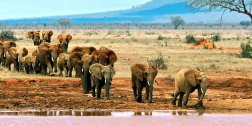 Here Are Interesting Places To Visit In Kenya For A Great Time With Family