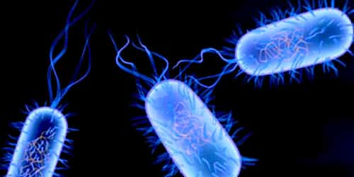 Everything You Should Know About Typhoid Fever