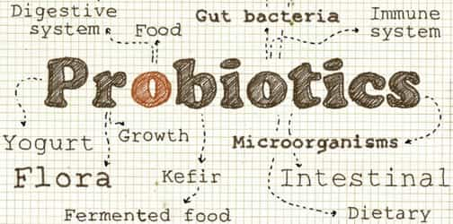 What Are The Benefits of Probiotics During Pregnancy?