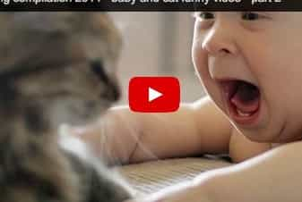 Baby tumbles over a cat! Funny baby video
