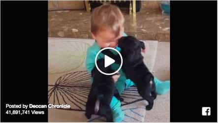 The pups love the little wonder: Cute baby video