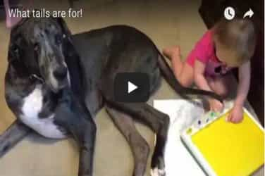 Adorable video of a little girl painting with her dog's tail goes viral