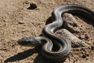 Shocking! 18-month-old dies after being breastfed by mother who was bitten by a snake