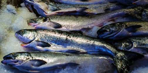 Is frozen fish just as healthy as fresh fish?