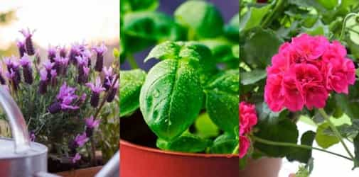 11 Effective Plants To Have For A Dengue-Free Home