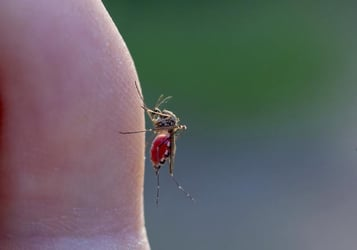 Early Dengue Symptoms - Ways to detect the disease before it gets worse