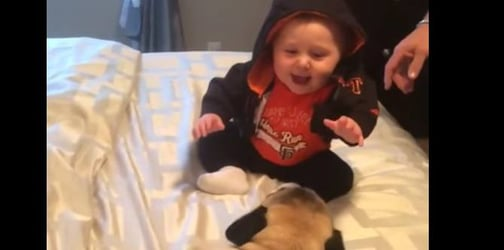 Baby and his pet pugs have an adorable playdate