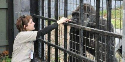 Zookeeper's post about Harambe's death goes viral