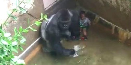 Mom of toddler who fell in Harambe's enclosure finally speaks out
