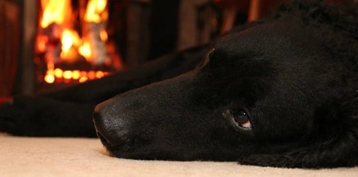 Family dog saves toddler from fire by shielding her with its own body