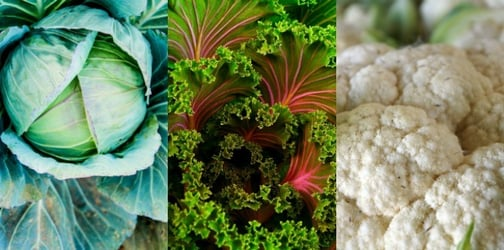 Presenting... the most nutritious vegetables on earth