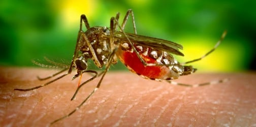 Vaccine shortage might soon spread yellow fever epidemic abroad