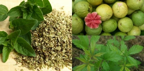 Healthy Pinoy herbs that are safe for your kids!