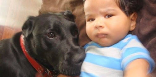 How to safely introduce pets to newborns