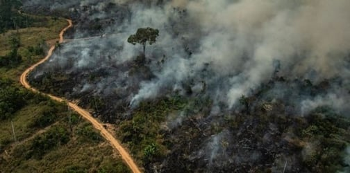 9 things you should teach your kids about the Amazon rainforest fire