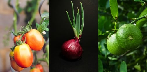 #TipidTips: How to grow your own vegetables indoors