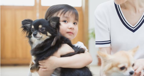 5 Reasons to Not Concede to Your Child's Request for a Pet