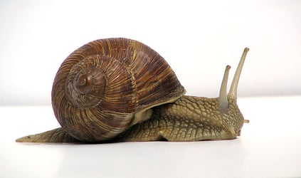 Your night cream might be made of snail slime!