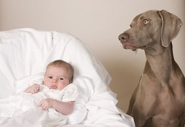 Getting a family dog: The dos and don'ts