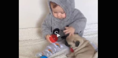 This baby and pug puppy playing is an unbearably cute sight!