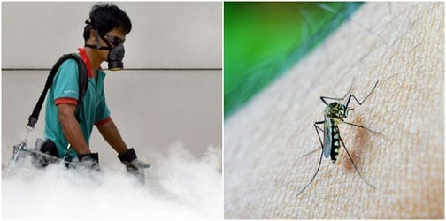 Dengue cases hit highest weekly total this year