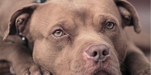 4-year-old boy dies after an attack by a gang of dogs
