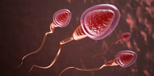 8 Sperm-killing Foods That Dads Need to Avoid!