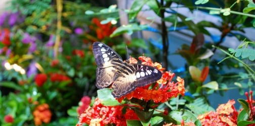 Win tickets to the country's first indoor butterfly sanctuary @ Singapore Science Centre!