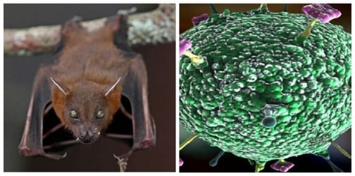 Nipah Virus Symptoms, Prevention And More: Information For Parents