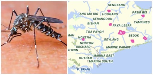 Dengue season: NEA reports more than 100 cases within a week