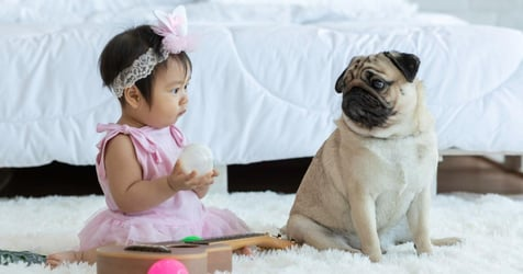 Introducing Pets To Newborns: A Guide For All Parents