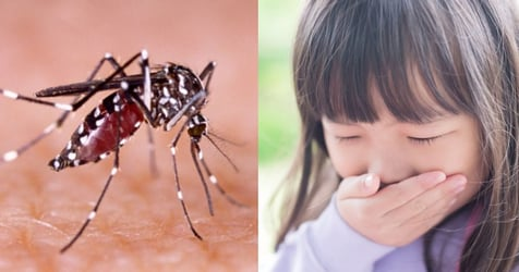 DenV-3: How to Protect Your Family From The New Strain of Dengue