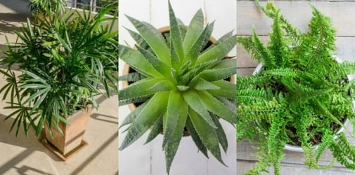 7 Purifying Plants To Keep Your Home Toxin-Free