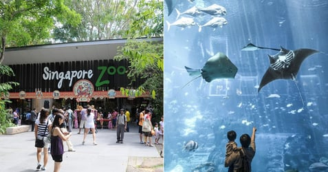 Singapore Zoo, Amusement Parks Among Attractions to Reopen on 1 July