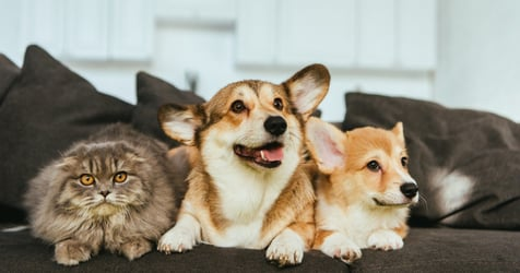 Online Pet Shops in Singapore: Best Places for Pet Essentials and Supplies