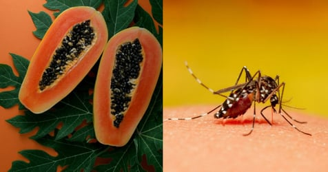 Dengue Prevention and Recovery: Benefits of Consuming Papaya Leaf Juice