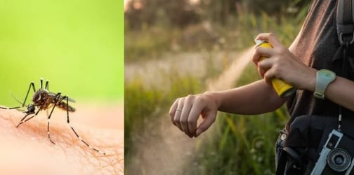 7 Natural DEET Free Mosquito Repellents That Will Keep Your Family Safe