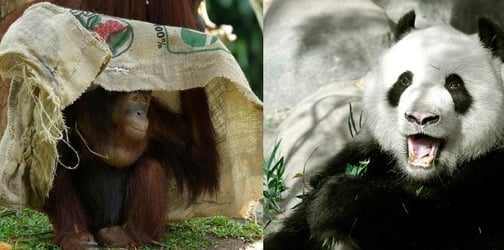 Planning A Trip To The Singapore Zoo? Here's Everything You Need To Know