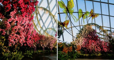 Gardens By The Bay Opens Magical 'Orchid Haven' At Cloud Forest