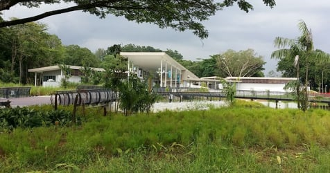 Sungei Buloh Wetland Reserve: A Fun Day Trip With The Entire Family
