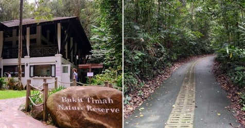Ultimate Guide To Bukit Timah Nature Reserve: A Day Of Hiking And Biking With The Kids