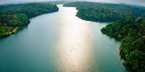 MacRitchie Reservoir In Singapore: Try Kayaking, Cross-country Runs, Nature Trails, Hiking And More