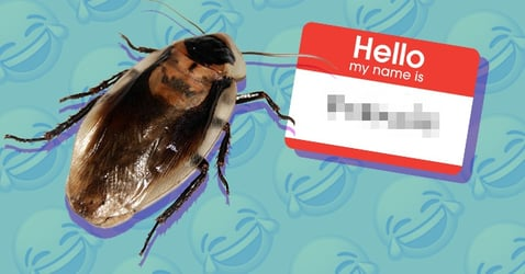 This Zoo Will Let You Name A Cockroach After Your Ex For Valentine's Day