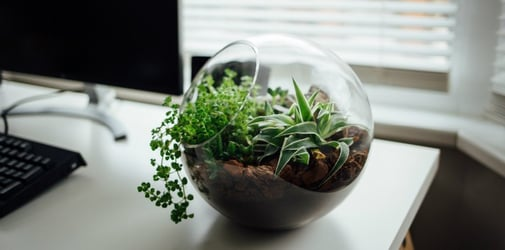 15 small office desk plants to liven up your workstation