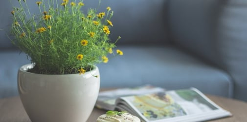 Stop Sneezing Once And For All By Removing These Plants